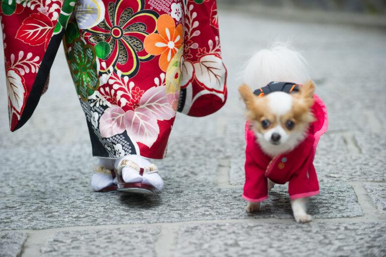 振袖を着て犬と歩く女性